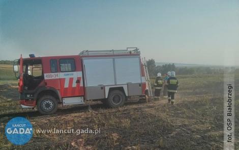 W Kosinie płonęły trawy