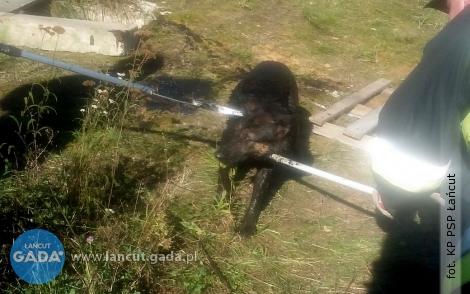 Strażacy ratowali uwięzionego psa