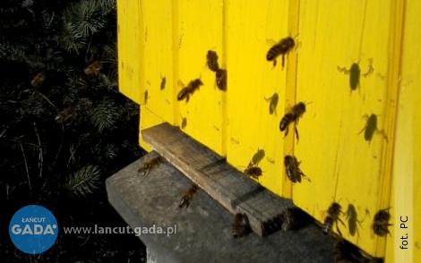 W Białobrzegach pszczoły poczuły wiosnę