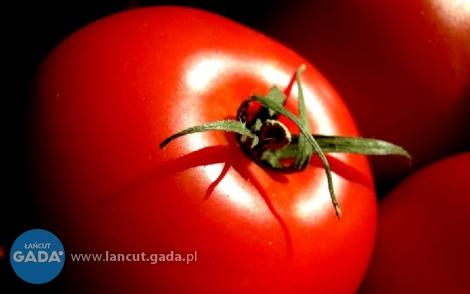 Pomidory zGłuchowa nagrodzone przez ekspertów