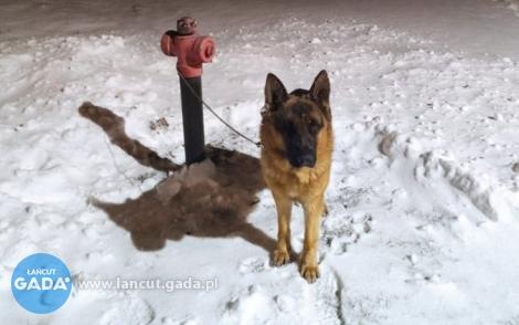 Ktoś przypiął psa do hydrantu