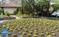 Ile pieniędzy na utrzymanie miejskiej zieleni?