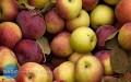 Darmowe jabłka wŁańcucie [AKTUALIZACJA]