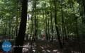 Mierzą lasy prywatne ipaństwowe