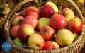 Dziś ijutro darmowe jabłka wŻołyni
