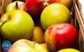 UWAGA! Darmowe jabłka nie dotarły dziś do Łańcuta. Będą jutro